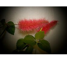 Pink Fuzzy Chenille Photographic Print