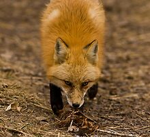 Sniff by Jay Ryser