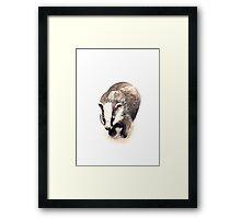 Badger Framed Print