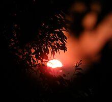 """""""Firey Glow""""! by TracyD"""
