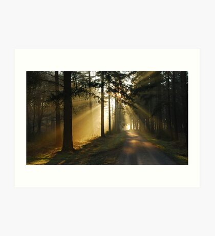 Going on a lightful forest road Art Print