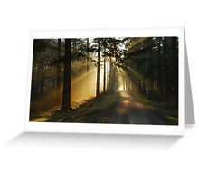 Going on a lightful forest road Greeting Card
