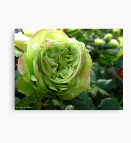 Irish Rose Canvas Print