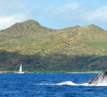 Humpback Whale Head Lunge Sticker