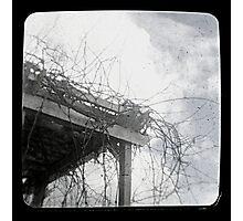 Grape Vines Ttv Photographic Print