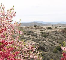 Red and Pink Desert by cocot101