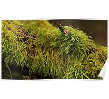 String-like moss covering an old tree. Poster