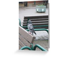 Pigeon in the rain Greeting Card