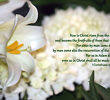 Even so in Christ shall all be made alive. by WalnutHill