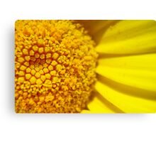 Yellow Delight Canvas Print