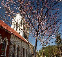 Peach Blossom tree at Catholic Church, Sapa, North Vietnam by Bev Pascoe