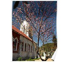 Peach Blossom tree at Catholic Church, Sapa, North Vietnam Poster