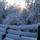 Winterstorm  Warning! by Lolabud