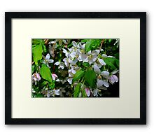 The Blooms ! Framed Print