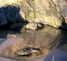 The Rockpool by Viv Andrew