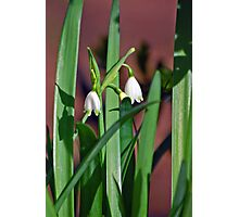 Sweet Beginnings Photographic Print