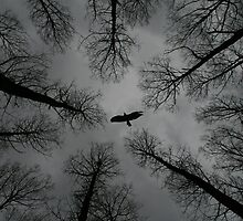 Buzzard in the woods by Ian  Wade