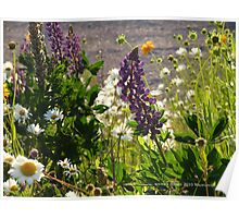 Wild Flowers in Watch Hill = Rhode Island Poster