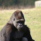 Gorilla by Mooguk