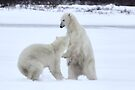 Polar Bear Stoush by Carole-Anne