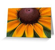 Rays of  Black Eyed Susan Greeting Card