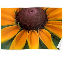 Rays of  Black Eyed Susan Poster