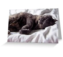 Purrfect Bliss Greeting Card