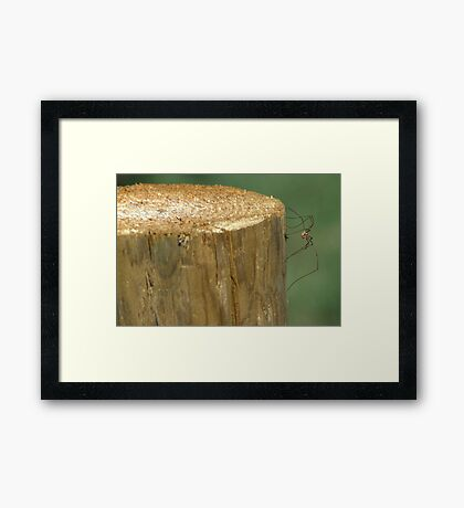 Daddy Long Legs Framed Print