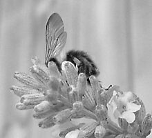 Bee by Jonathan Goddard
