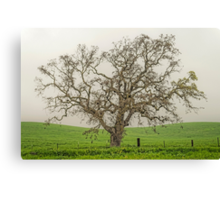 New Growth on Old Tree Canvas Print