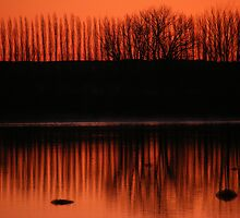 TREE LINE BATHING IN ORANGE LITE by Stacy Colean
