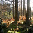 Glentrool Forest 3 by Viv Andrew