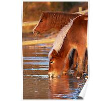 At The Waterhole - New Forest Poster