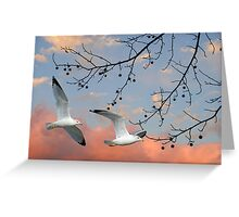 Gulls on a Rosy Day Greeting Card