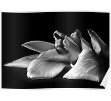 BW lilly Poster