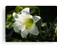 Divine Glow - Illuminated Pure White Easter Lily Canvas Print