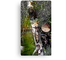 Medicine Tree Canvas Print
