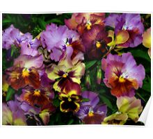 Pansy Mania Poster