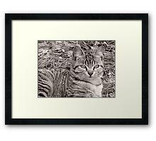 striped kitty Framed Print