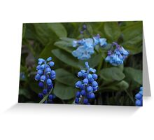 Grape Hyacinths Greeting Card