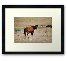 Looking Horse Framed Print