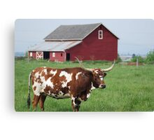 Longhorn and Red barn Canvas Print