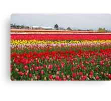 Field of Many Colors Canvas Print