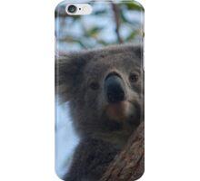Koala up a tree B iPhone Case/Skin