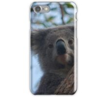 Koala up a tree B iPhone Case/Skin