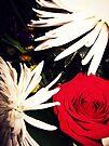 bouquets  by schizomania