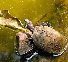 Turtles by juan jose Gabaldon