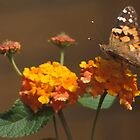 Painted Lady by Bill Spengler