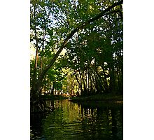 Springtime on the Hillsborough River Photographic Print