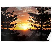 Trees in the sunset Poster